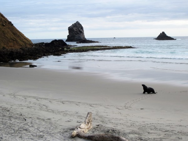 new-zealand_south-island_dunedin_otago-peninsula_sea-lion
