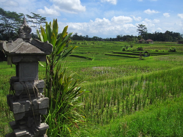 Bali must do's for first timers