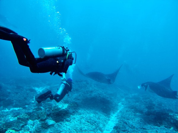 Diving in Nusa